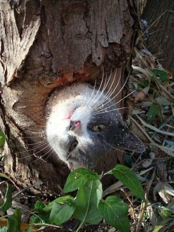Ζώα που... κόλλησαν! (15)