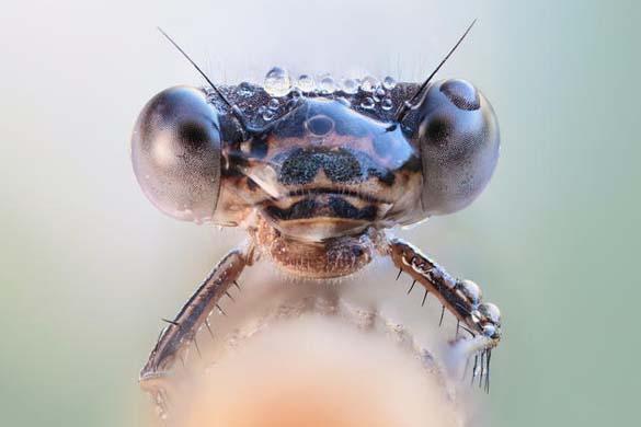 Εκπληκτικές macro φωτογραφίες εντόμων (2)