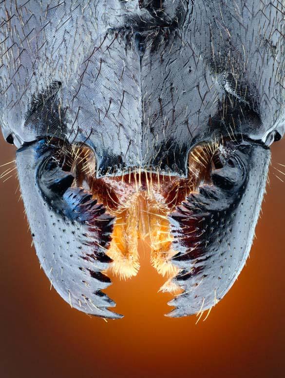 Εκπληκτικές macro φωτογραφίες εντόμων (3)