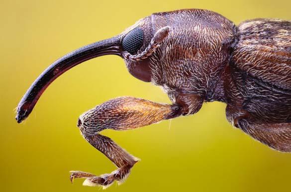 Εκπληκτικές macro φωτογραφίες εντόμων (4)