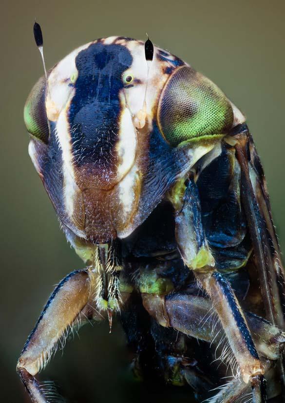 Εκπληκτικές macro φωτογραφίες εντόμων (10)