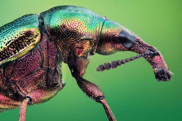 Εκπληκτικές macro φωτογραφίες εντόμων (11)