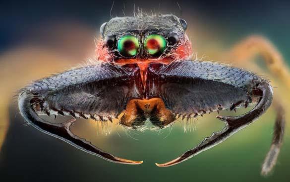 Εκπληκτικές macro φωτογραφίες εντόμων (12)