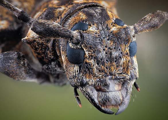 Εκπληκτικές macro φωτογραφίες εντόμων (13)