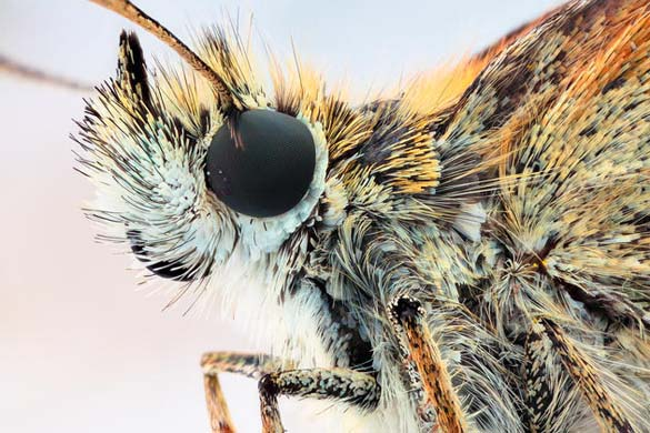 Εκπληκτικές macro φωτογραφίες εντόμων (18)