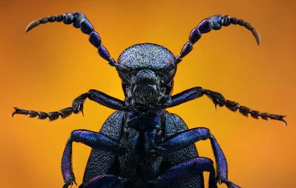 Εκπληκτικές macro φωτογραφίες εντόμων (20)