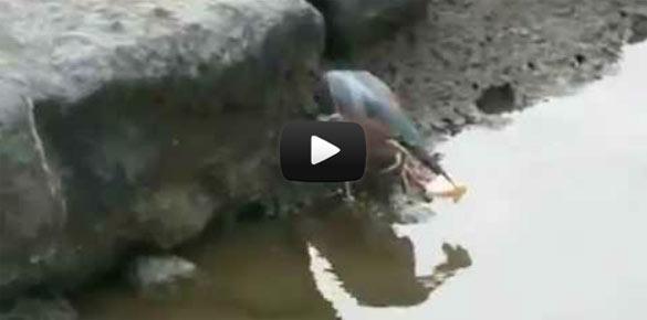 Έξυπνο πουλί πάει για ψάρεμα