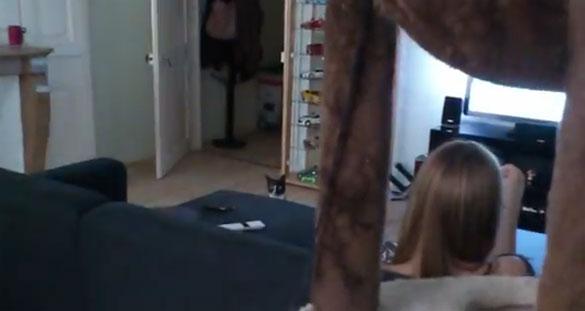 Γάτα τηλεμεταφέρεται από τη μια άκρη του δωματίου στην άλλη