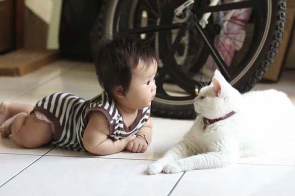 Γάτες και μωρά (1)