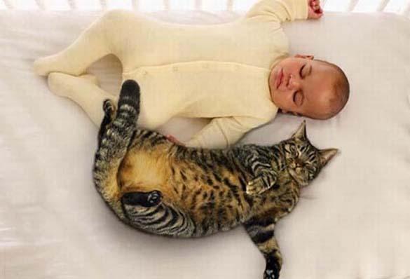 Γάτες και μωρά (2)