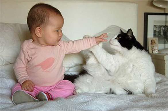 Γάτες και μωρά (3)