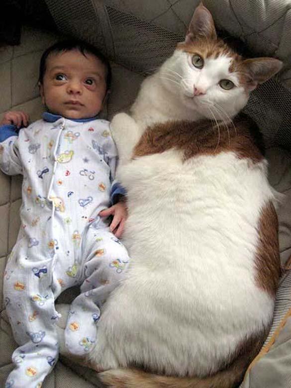 Γάτες και μωρά (6)