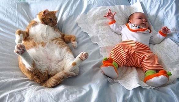 Γάτες και μωρά (8)