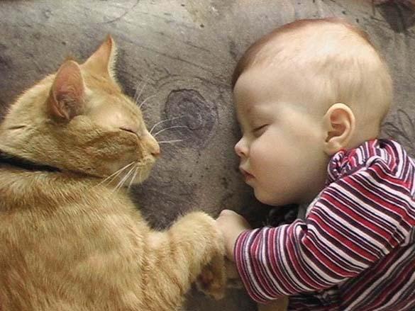 Γάτες και μωρά (9)