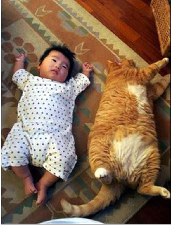 Γάτες και μωρά (12)
