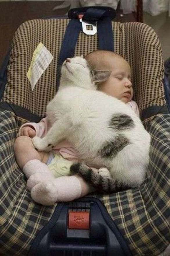 Γάτες και μωρά (14)