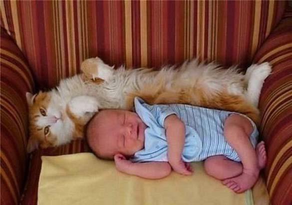 Γάτες και μωρά (16)