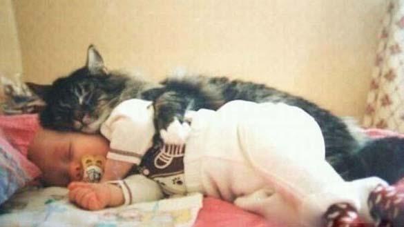 Γάτες και μωρά (17)