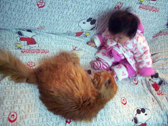 Γάτες και μωρά (22)