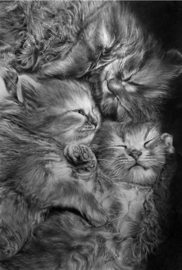 15 γάτες που δεν θα πιστεύετε ότι είναι μόνο σκίτσα με μολύβι (2)