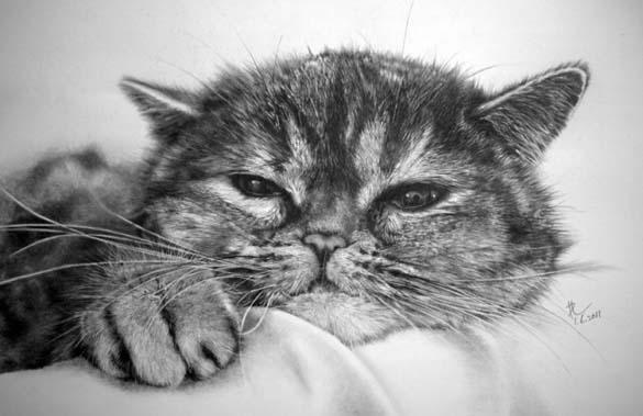 15 γάτες που δεν θα πιστεύετε ότι είναι μόνο σκίτσα με μολύβι (3)
