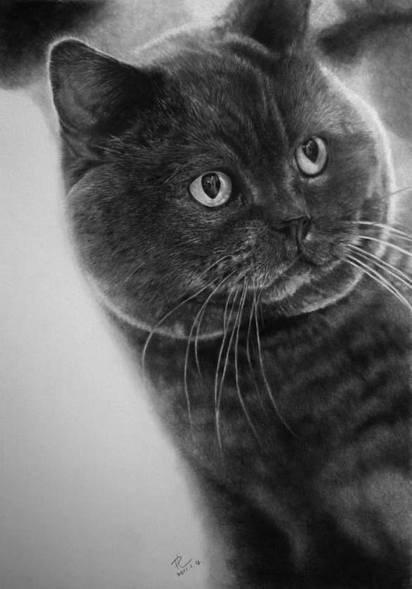 15 γάτες που δεν θα πιστεύετε ότι είναι μόνο σκίτσα με μολύβι (4)