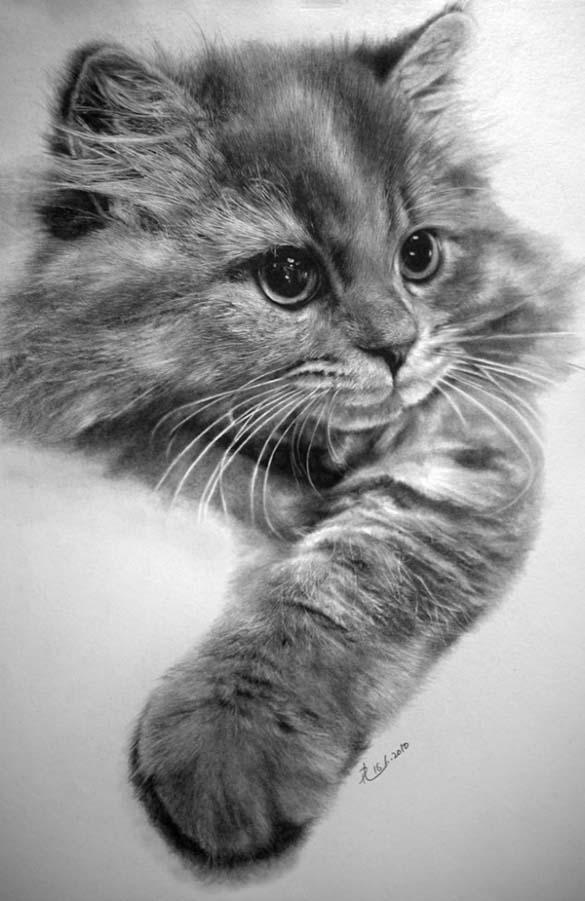15 γάτες που δεν θα πιστεύετε ότι είναι μόνο σκίτσα με μολύβι (5)