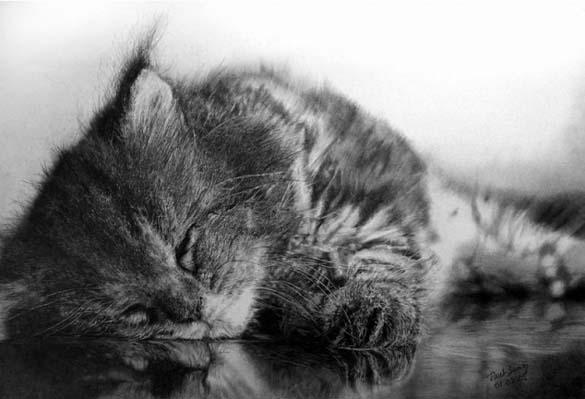 15 γάτες που δεν θα πιστεύετε ότι είναι μόνο σκίτσα με μολύβι (6)