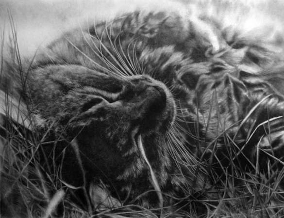 15 γάτες που δεν θα πιστεύετε ότι είναι μόνο σκίτσα με μολύβι (7)