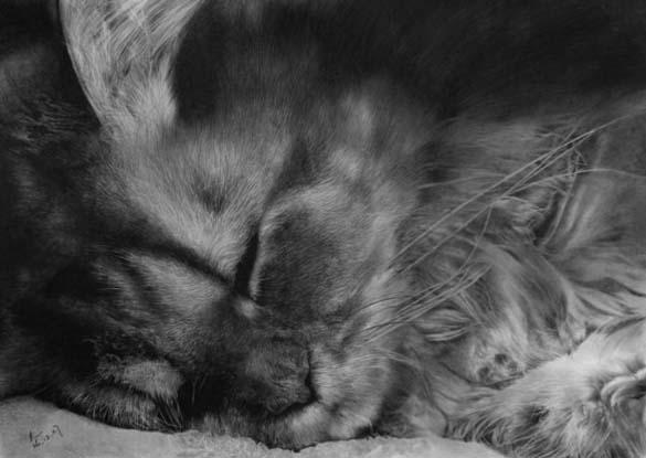 15 γάτες που δεν θα πιστεύετε ότι είναι μόνο σκίτσα με μολύβι (9)