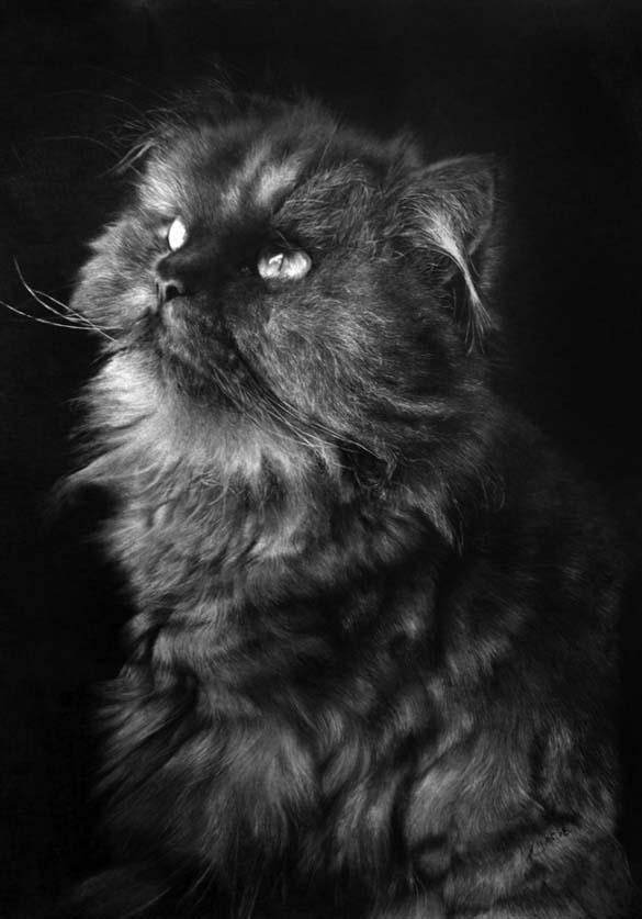 15 γάτες που δεν θα πιστεύετε ότι είναι μόνο σκίτσα με μολύβι (10)