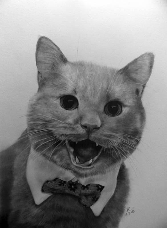 15 γάτες που δεν θα πιστεύετε ότι είναι μόνο σκίτσα με μολύβι (12)
