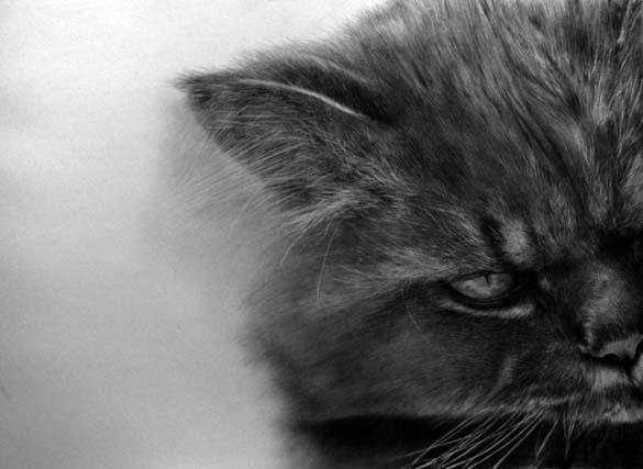 15 γάτες που δεν θα πιστεύετε ότι είναι μόνο σκίτσα με μολύβι (13)