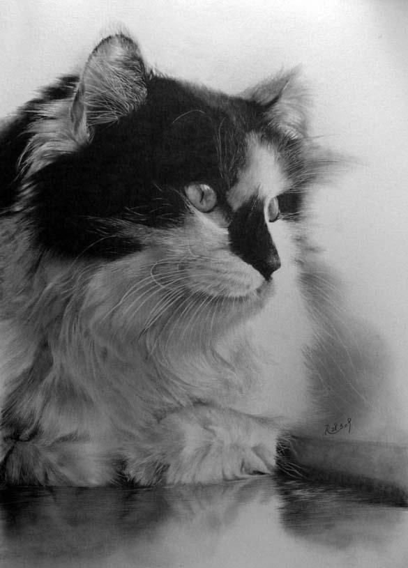 15 γάτες που δεν θα πιστεύετε ότι είναι μόνο σκίτσα με μολύβι (14)