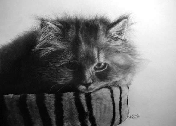 15 γάτες που δεν θα πιστεύετε ότι είναι μόνο σκίτσα με μολύβι (15)
