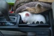 Γάτες στα πιο παράξενα μέρη (24)