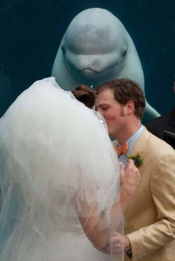 Καταστροφικές εισβολές σε γαμήλιες φωτογραφίες (5)