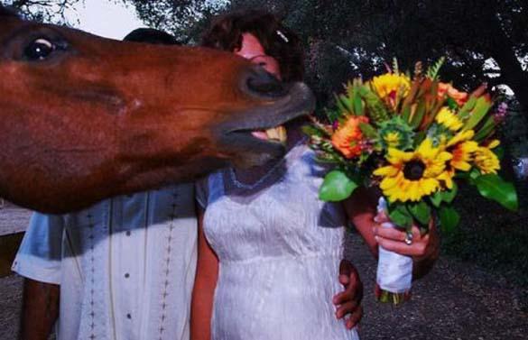 Καταστροφικές εισβολές σε γαμήλιες φωτογραφίες (12)