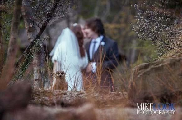 Καταστροφικές εισβολές σε γαμήλιες φωτογραφίες (13)