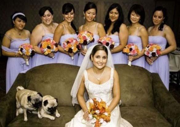Καταστροφικές εισβολές σε γαμήλιες φωτογραφίες (20)