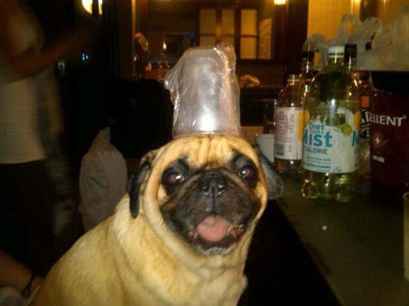 Η μεγάλη ζωή του Winston του Pug (2)