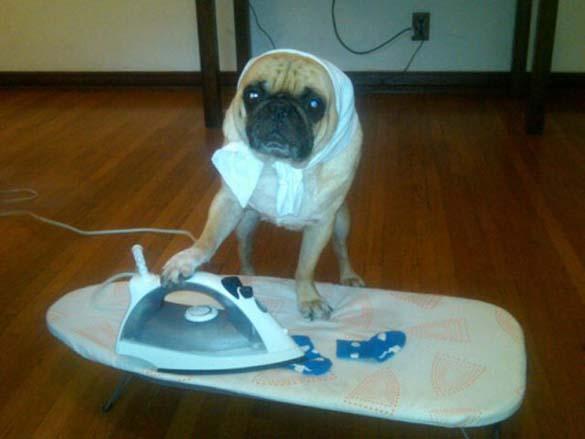 Η μεγάλη ζωή του Winston του Pug (5)