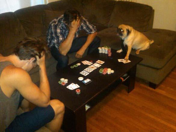Η μεγάλη ζωή του Winston του Pug (6)