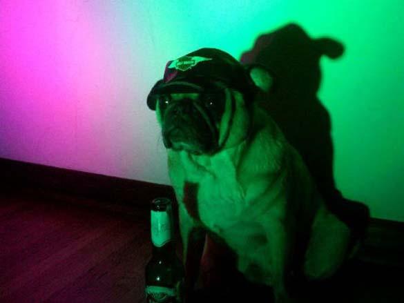 Η μεγάλη ζωή του Winston του Pug (13)