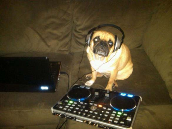 Η μεγάλη ζωή του Winston του Pug (20)