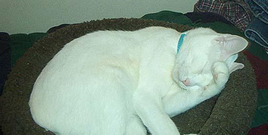 Όταν οι γάτες έχουν Hangover (3)