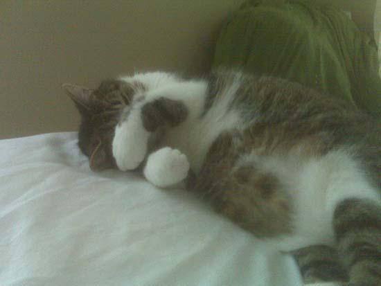 Όταν οι γάτες έχουν Hangover (4)
