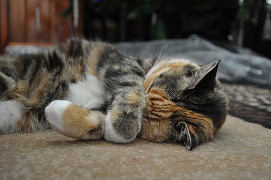 Όταν οι γάτες έχουν Hangover (5)