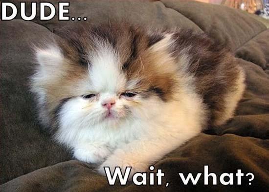 Όταν οι γάτες έχουν Hangover (8)