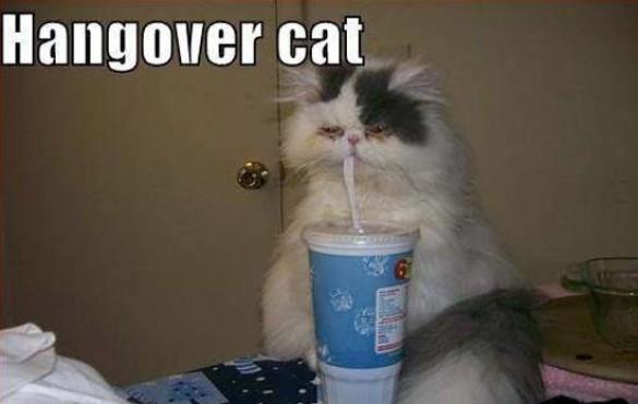 Όταν οι γάτες έχουν Hangover (9)